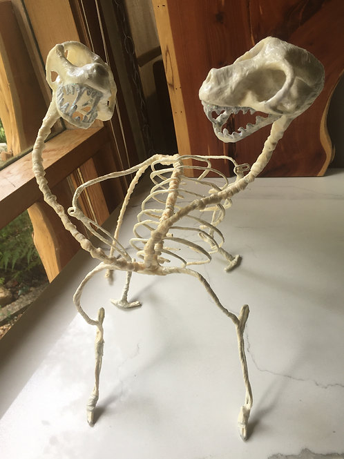 Ashley Woods: 2 Headed Cat Skeleton