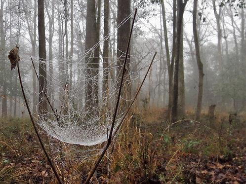 Rosemary Woodel: Cemetary Web