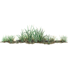 grass_png.png