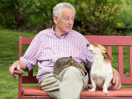 Pet Trusts offer Peace of Mind for Animal Lovers