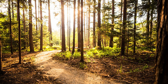 Hiking path and sunset in beautiful woods panoramic view, inspirational summer landscape i