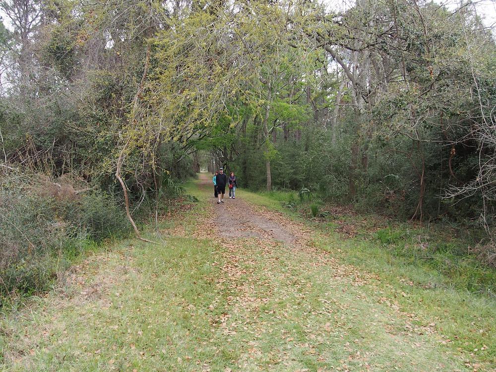 Trails on Pickney Island