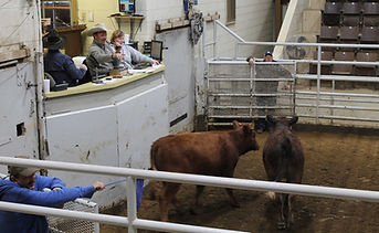 Parsons Livestock.jpg