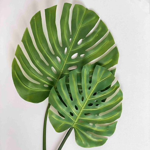 VARA DE MONSTERA