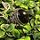 Thumbnail: Dark Amethyst Ring
