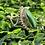 Thumbnail: Malachite Oval Ring