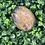 Thumbnail: Black & Peach Moonstone