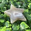 Thumbnail: Agate Stars