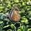 Thumbnail: Sunstone Ring