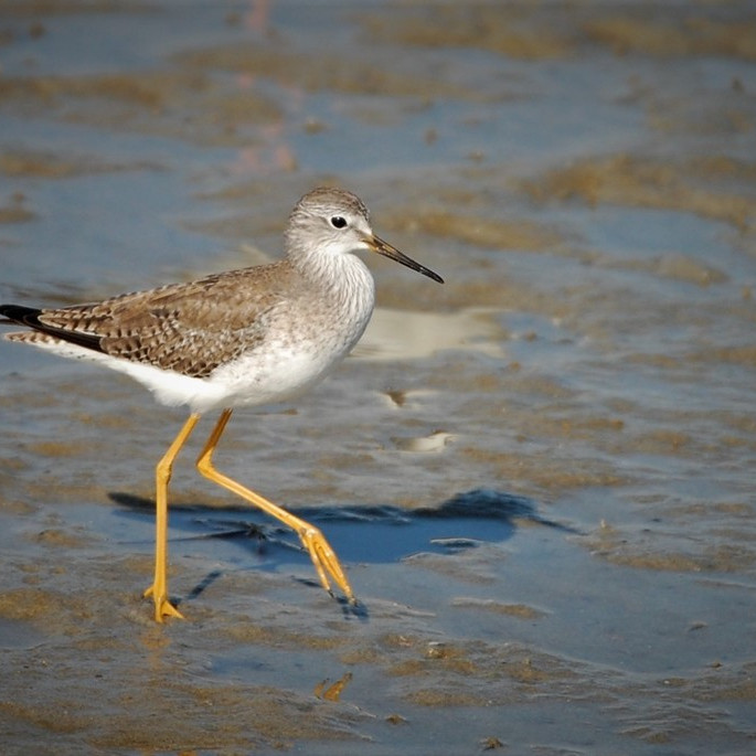 Monday Oct 11th Guided Birding Tour