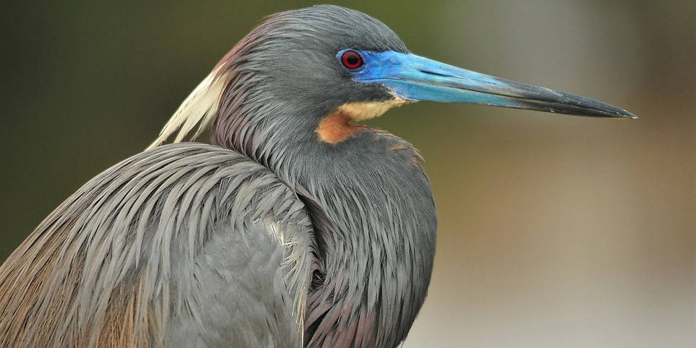 Saturday July 24th Guided Birding Tour