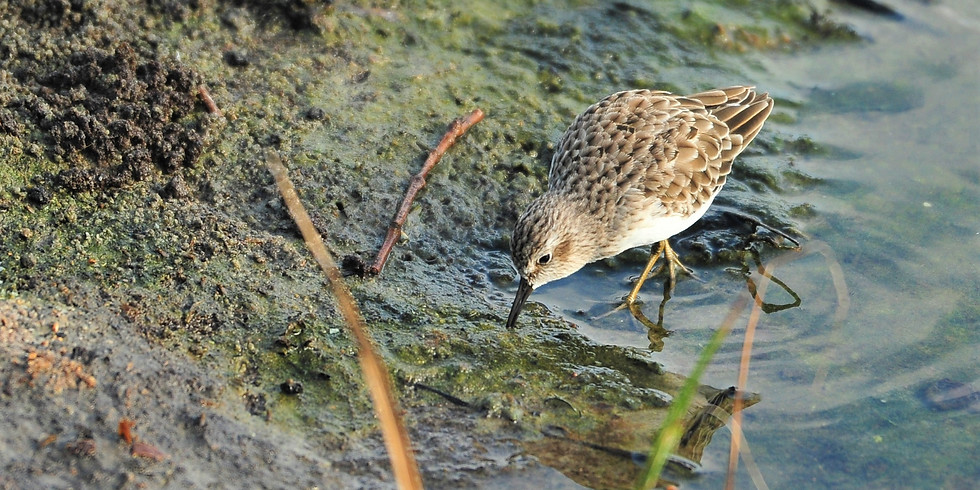 Friday Oct. 1st Guided Birding Tour