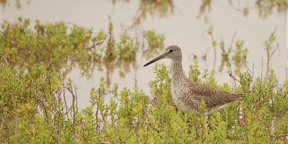 Friday July 2nd Guided Birding Tour