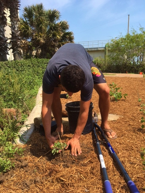 Boy Scout, Travis Camacho planting Zizotes Milkweed