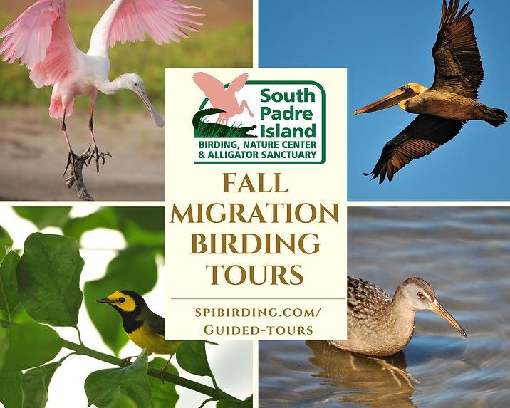 Fall Birding Tour Flyer.png