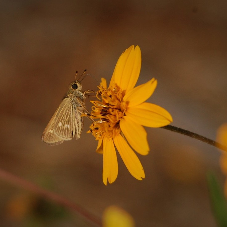 Kids Pollinator Workshop