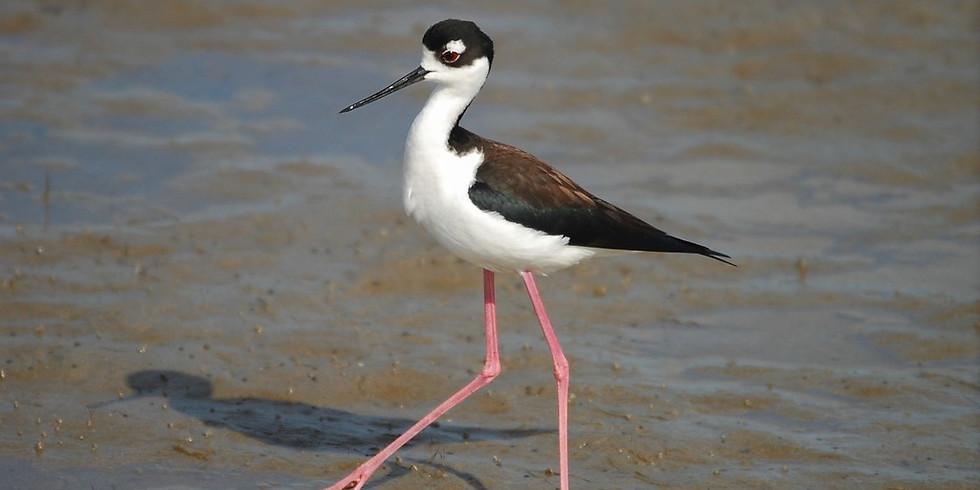 Wednesday Sept 22nd Guided Birding Tour