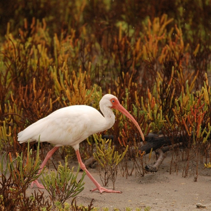 Tuesday October 12th Guided Birding Tour