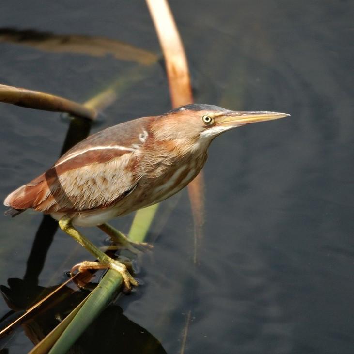 Tuesday Sept. 28th Guided Birding Tour