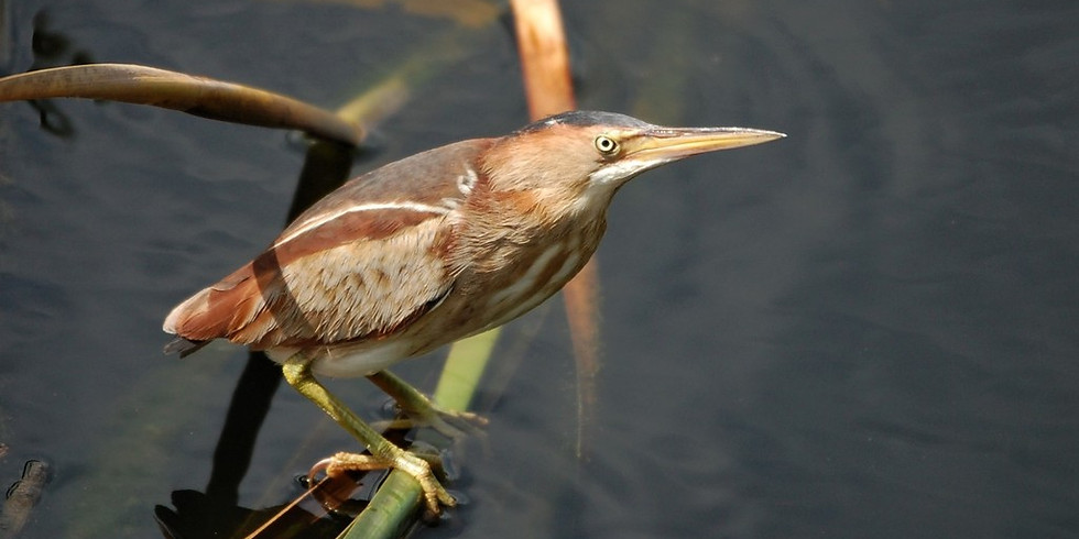 Thursday August 5th Guided Birding Tour