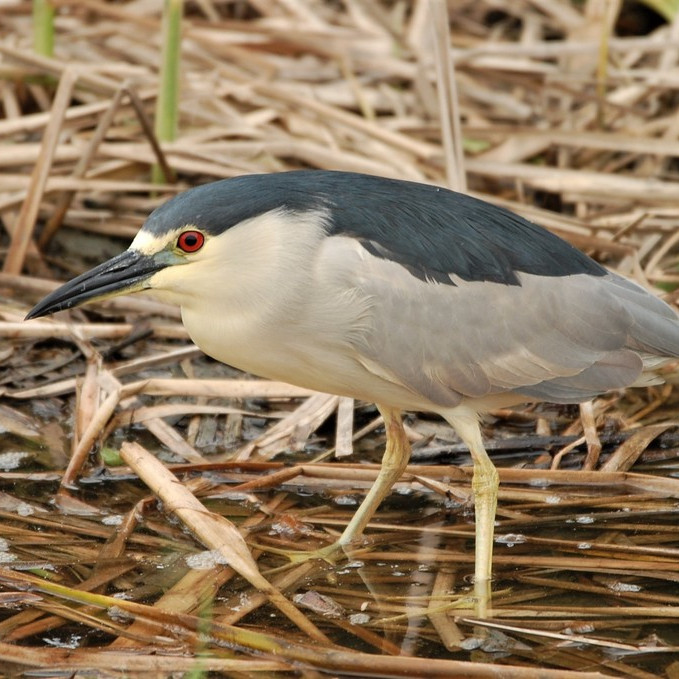 Wednesday June 30th Guided Birding Tour