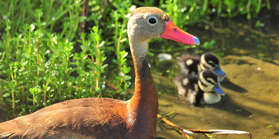 Wednesday June 16th Guided Birding Tour