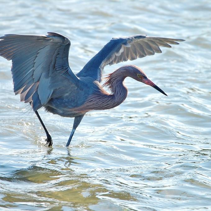 Saturday June 26th Guided Birding Tour
