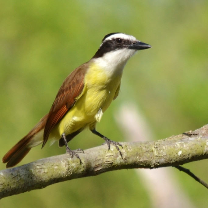 Wednesday Sept 29th Guided Birding Tour