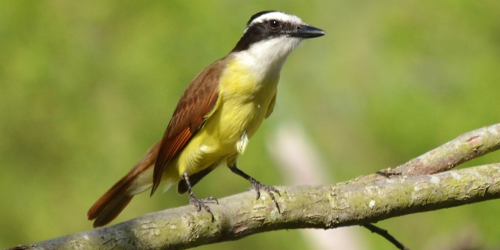 Wednesday July 7th Guided Birding Tour