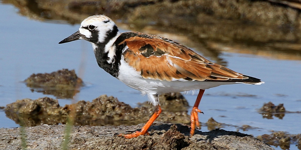 Saturday August 14th Guided Birding Tour