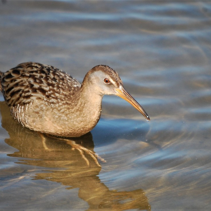 Tuesday Oct 5th Guided Birding Tour