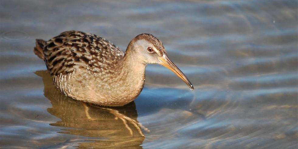 Tuesday Sept 7th Guided Birding Tour