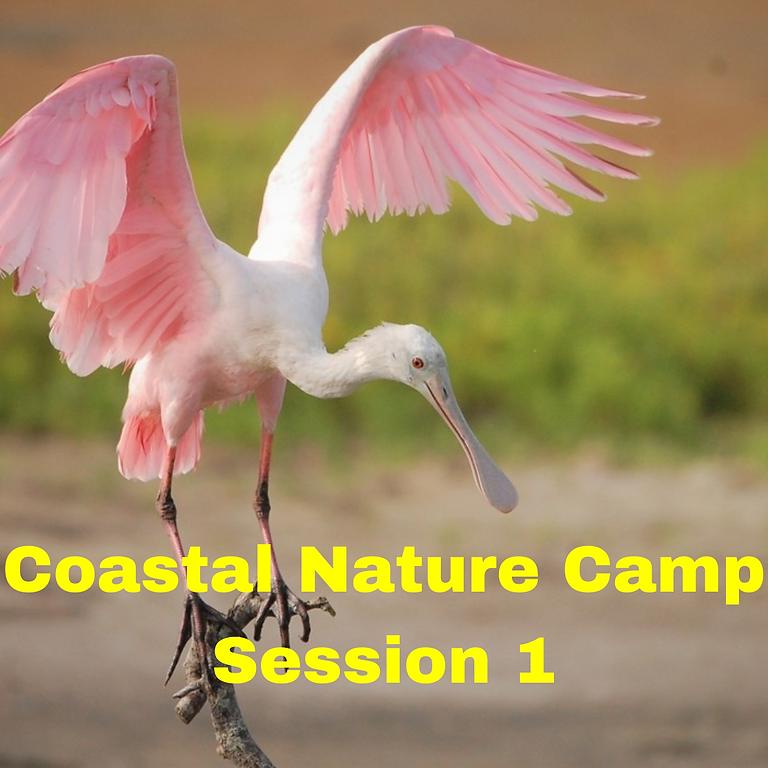 Coastal Nature Camp 2021 Session 1
