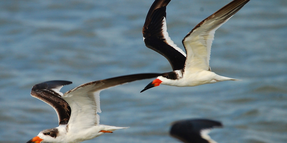 Friday July 23rd Guided Birding Tour