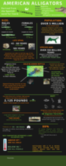 Alligator Infographic (2).png