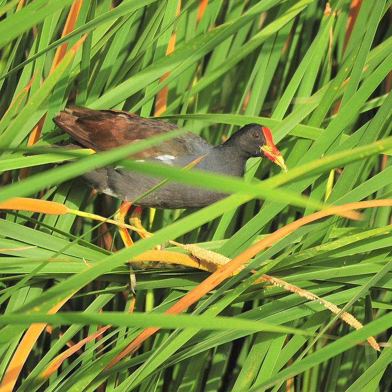 Thursday Sept 30th Guided Birding Tour