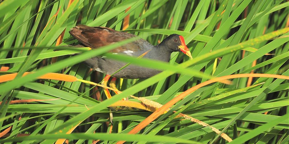Thursday Sept 16th Guided Birding Tour