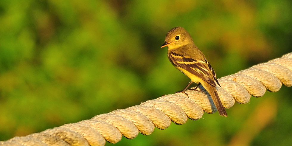 Wednesday October 6th Guided Birding Tour
