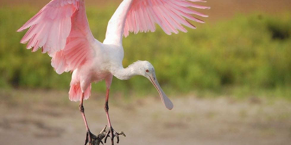 Saturday August 21st Guided Birding Tour