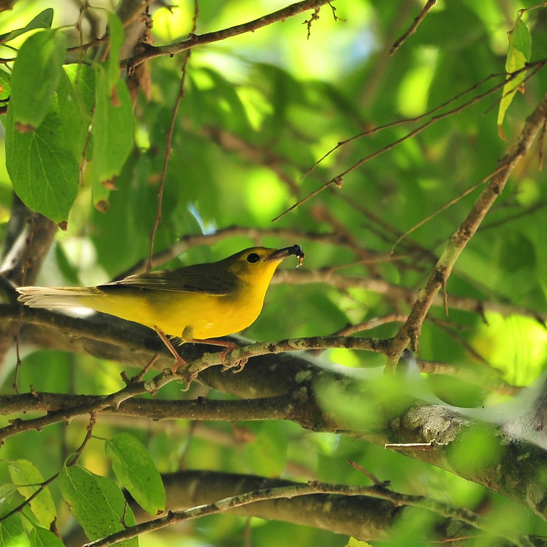 Monday Oct 4th Guided Birding Tour