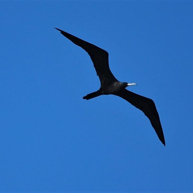 Thursday July 1st Guided Birding Tour