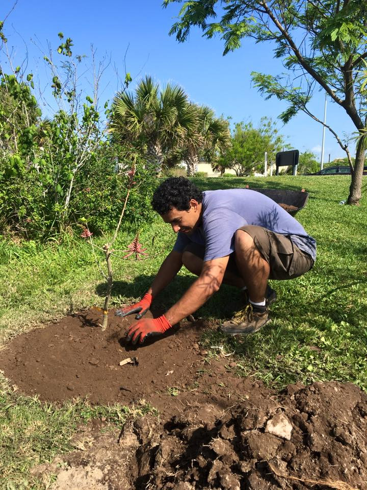 Volunteer planting a Coral Bean