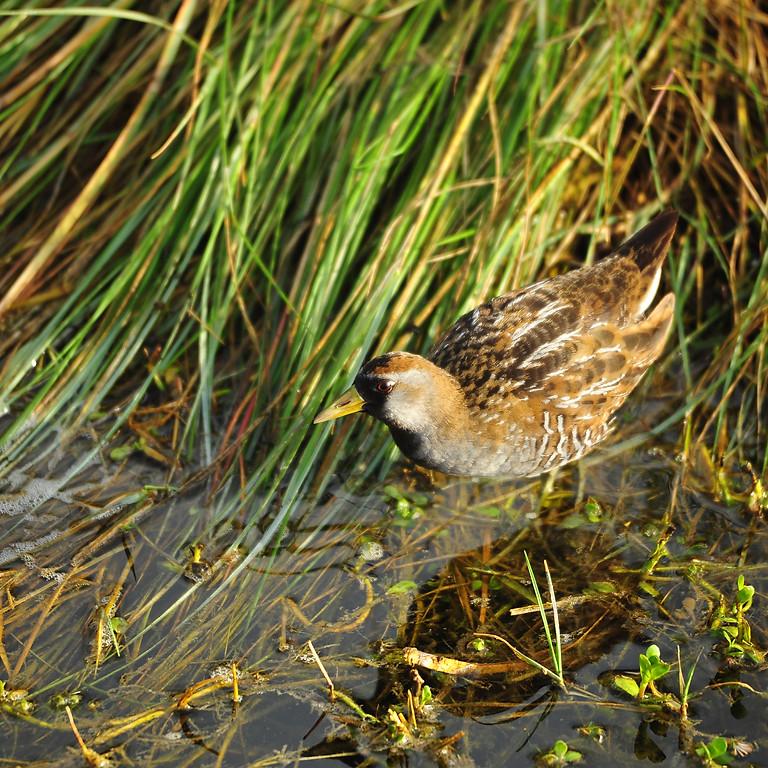 Tuesday Nov 30th Guided Birding Tour