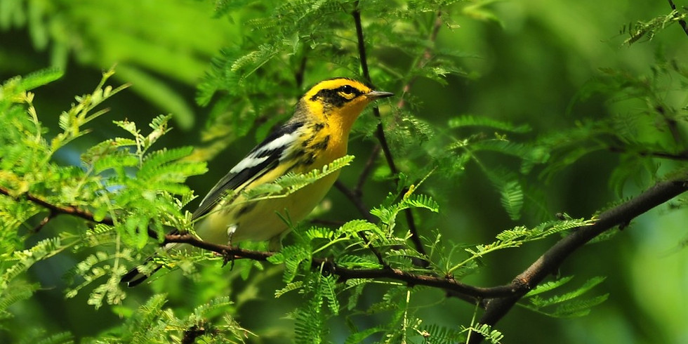 Friday Oct 8th Guided Birding Tour