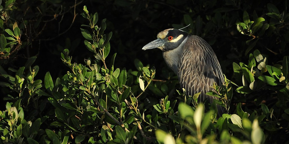 Friday July 16th Guided Birding Tour