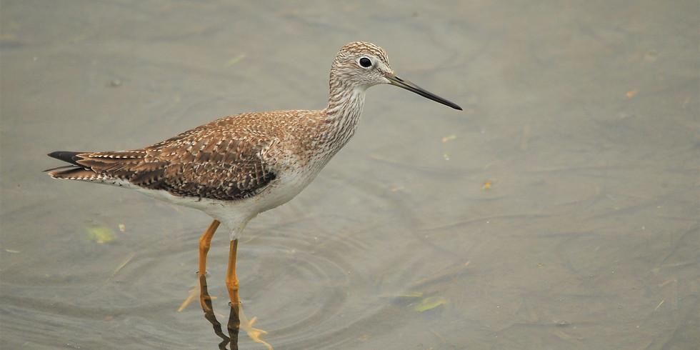 Thursday August 26th Guided Birding Tour