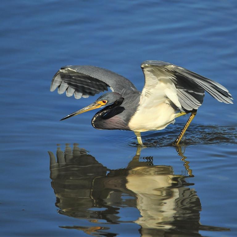 Monday Sept 27th Guided Birding Tour