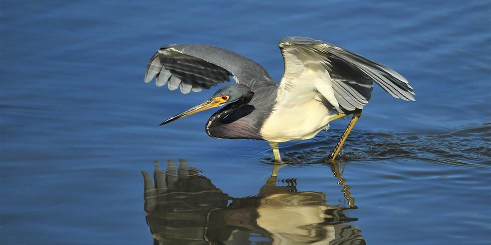 Monday Sept 13th Guided Birding Tour