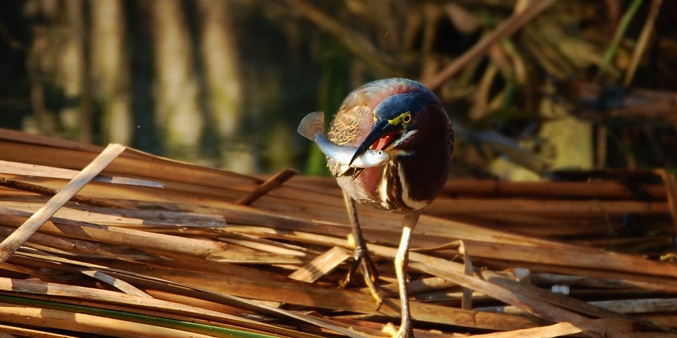 Thursday July 22nd Guided Birding Tour