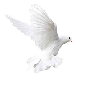 dove larger.png